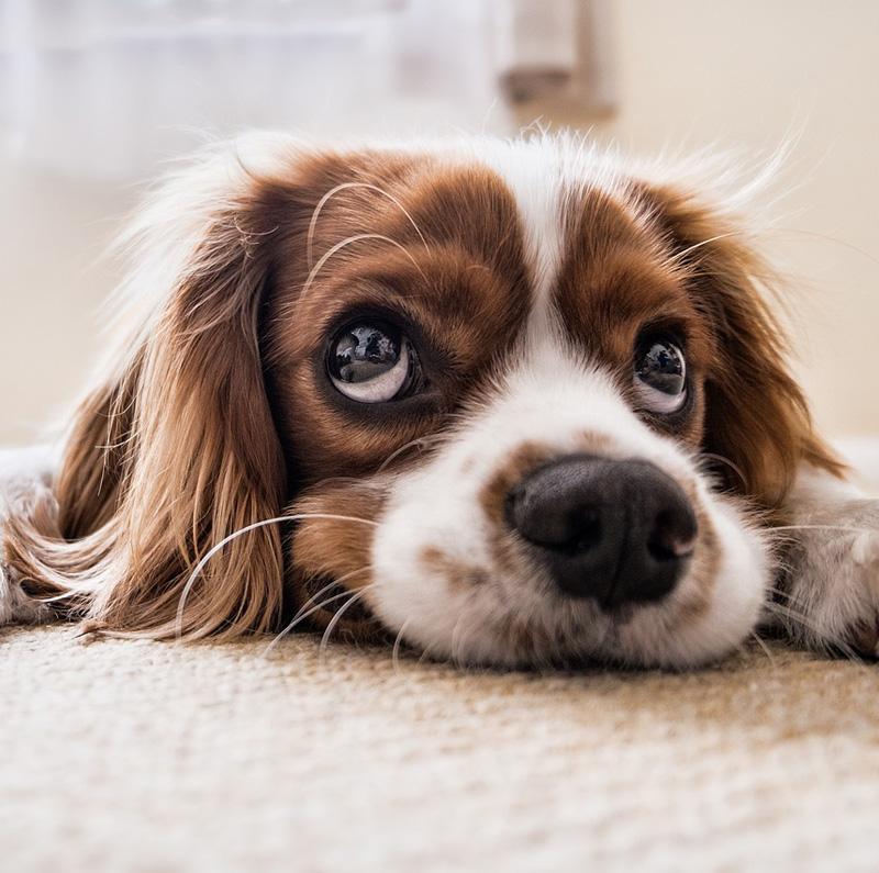 My Dog Toelettatura a San Benedetto del Tronto