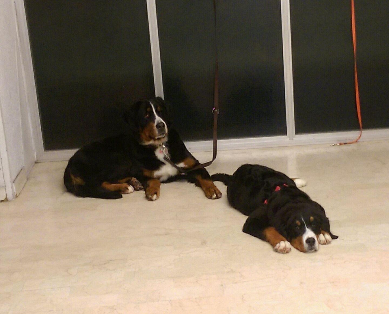 My Dog, Toelettatura per cani e gatti a San Benedetto del Tronto